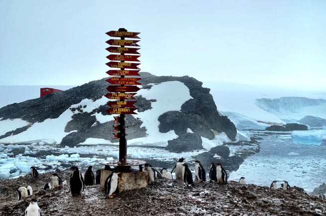 Follow these tips to prepare for a trip to Antacartica.