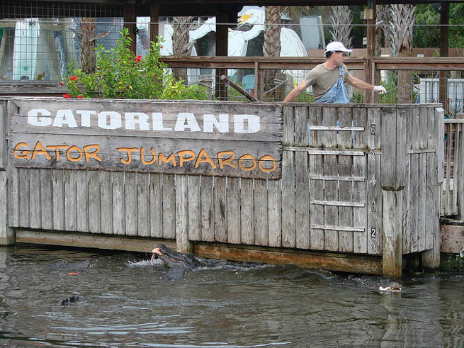 There is more to do in Orlando than just Disney. Check out these ideas for alternatives.