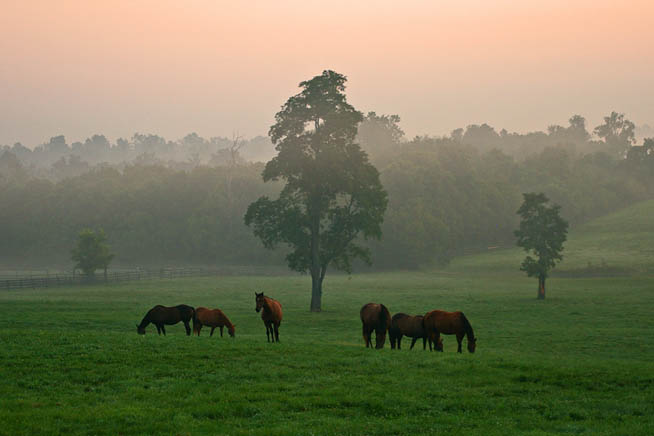 Lexington, Kentucky, is home to many horse farms and is a great place to get up close and personal with these animals.