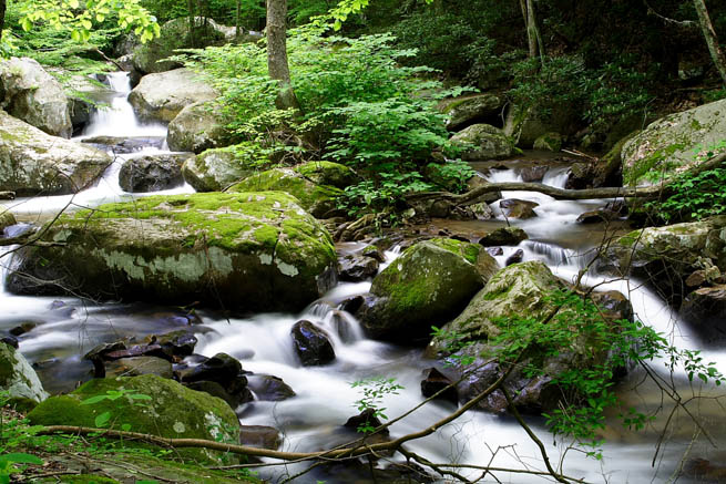 A stream meanders through the world's second largest hard wood forest in West Virginia and Kentucky.