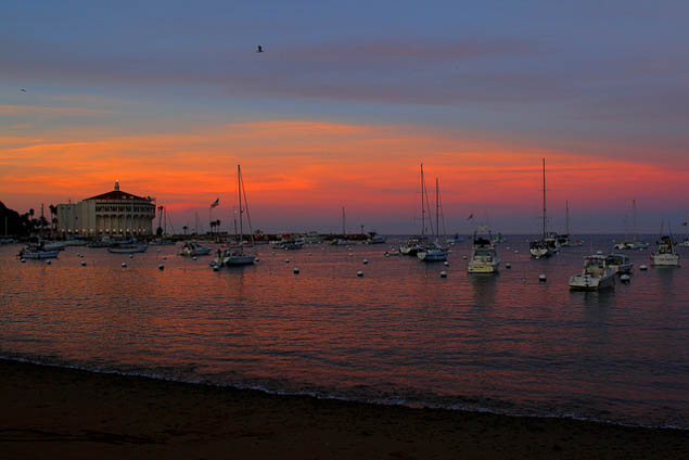 Looking to get out of the bustle of LA then why not plan a relaxing escape on Catalina Island?