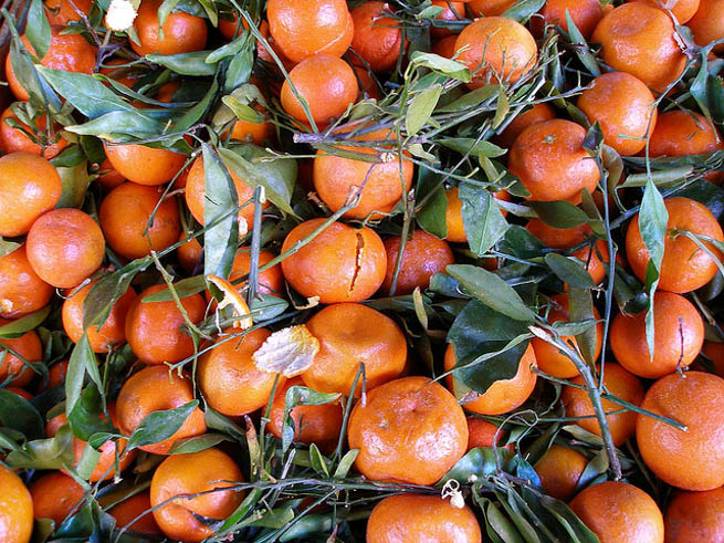 Orange is the fruit of the citrus species Citrus