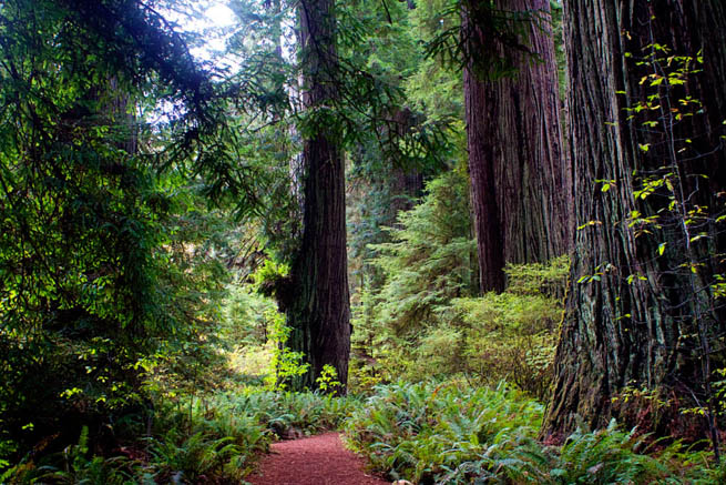 Redwood National and State Parks (RNSP) are located in the United States, along the coast of northern California