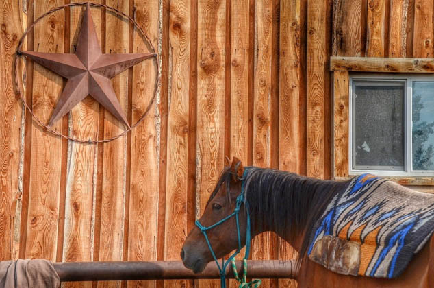 Experience the great outdoors in a saddle with these fun and adventurous horse riding experiences around the US.