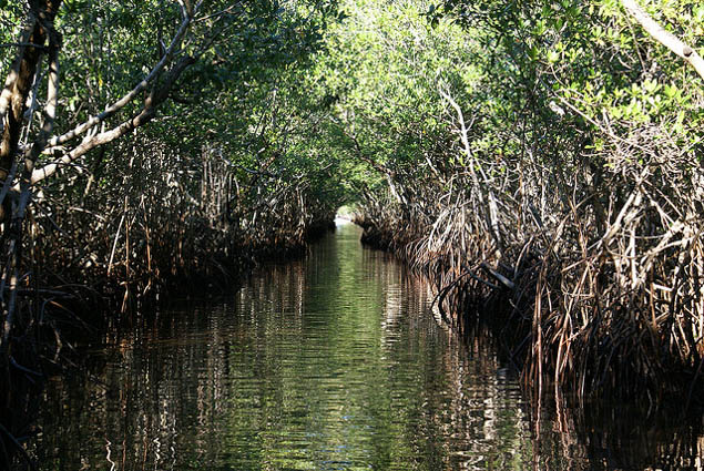 See the best of one of America's most unusual natural escapes - the Florida Everglades.
