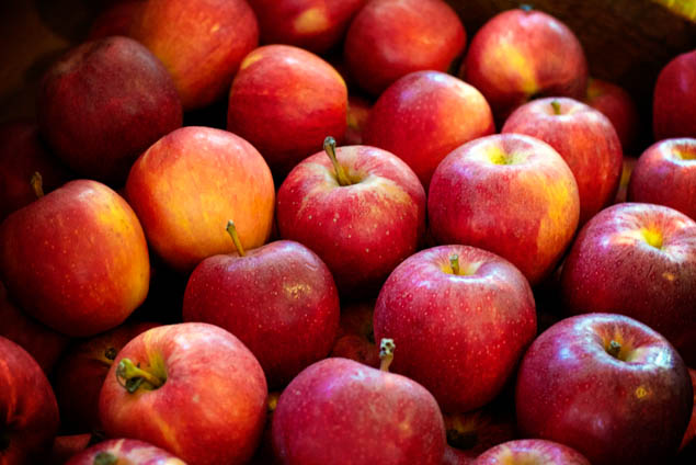Pack up the whole family and go apple picking, but be sure to visit one of these amazing orchards.