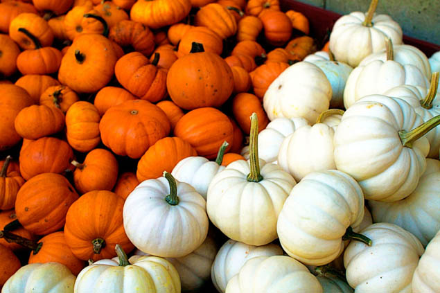 Discover the best pumpkin patches near you this holiday season.
