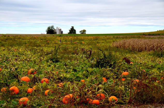 Plan a fall season you won't forget by attending these fun autumnal events!