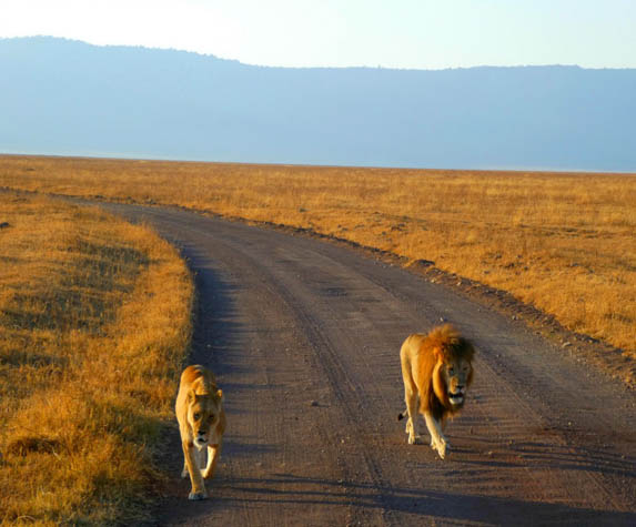 Go on a safari you'll never forget with these amazing experiences in Tanzania.