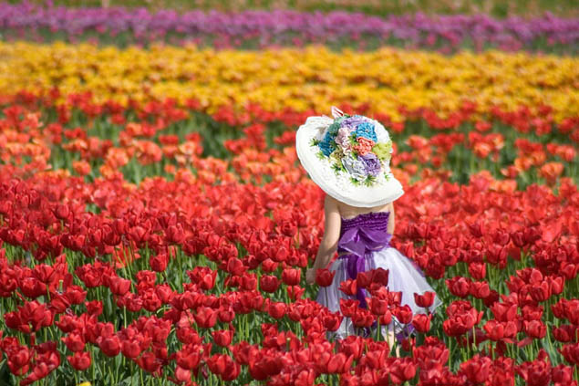 Plan a colorful trip you'll never forget by attending one of these fun flower festivals.