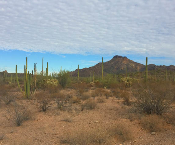 Discover why this corner of Arizona is loved by millions around the world.
