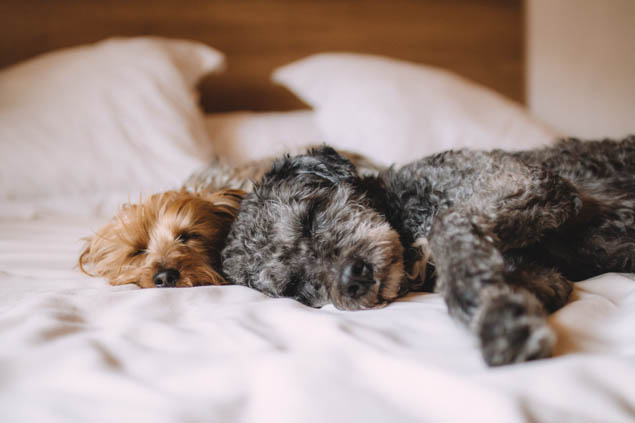 Leaving our furry friends behind when we travel is hard, but here's how to find the best pet sitter for them.