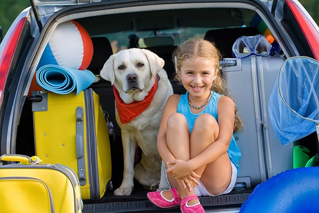 what to pack when traveling with pet