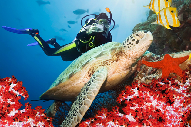 Did you know that you may need additional insurance along with your travel insurance in order to be covered for SCUBA diving?