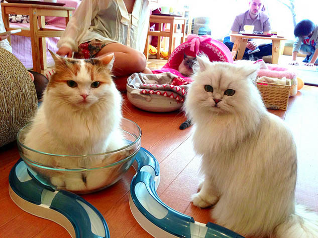 Do something different and visit these quirky cat cafes around the world.