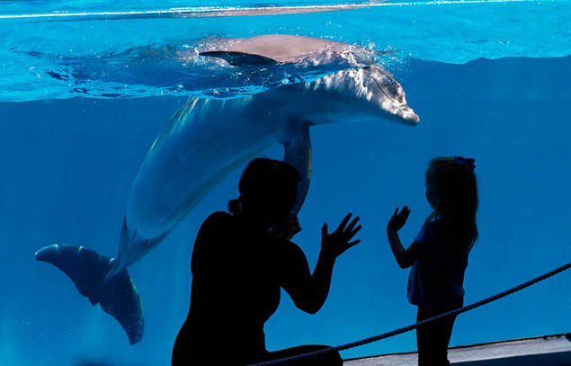 Thoughtful post sharing why travelers should always avoid dolphin encounters.