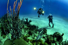 SCUBA diving insurance is important for any dive vacation.